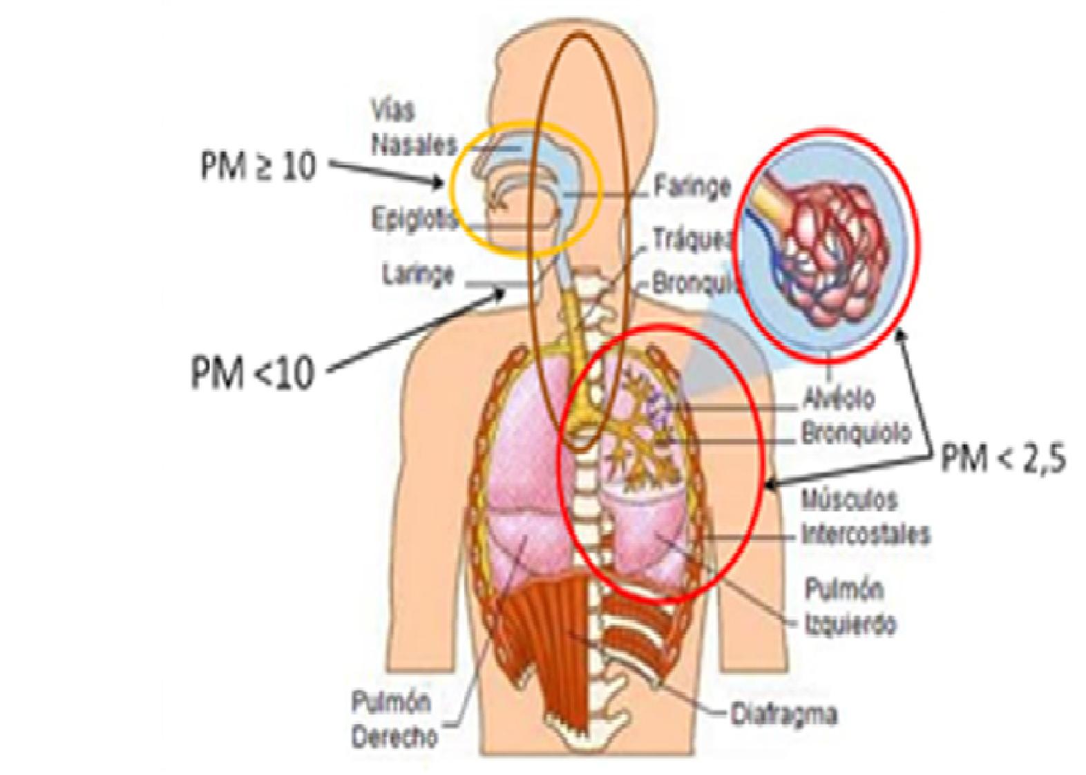Exposición a Material Particulado (PM) y efectos en Salud ...