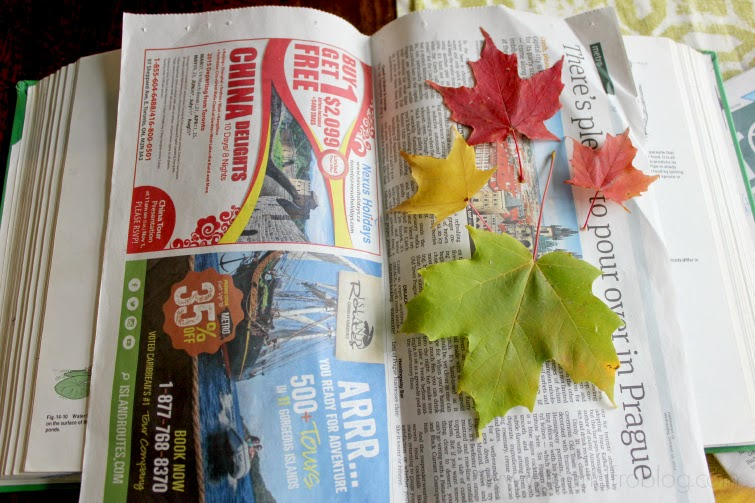 how to preserve fall leaves