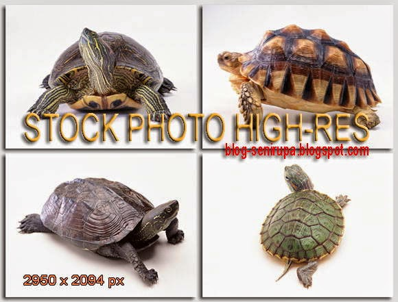 Stock Photo Gambar Kura-kura High Resolution