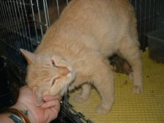 5/10/11 Lots of Great Cats and Dogs Kill Shelter Griffin GA