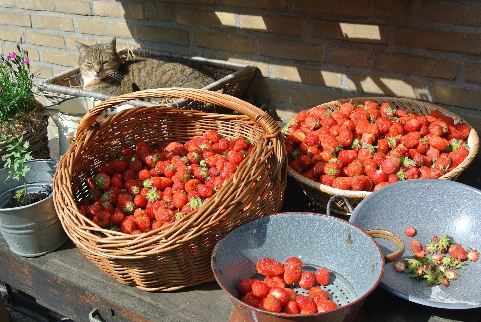aardbeien voor confituur te koop
