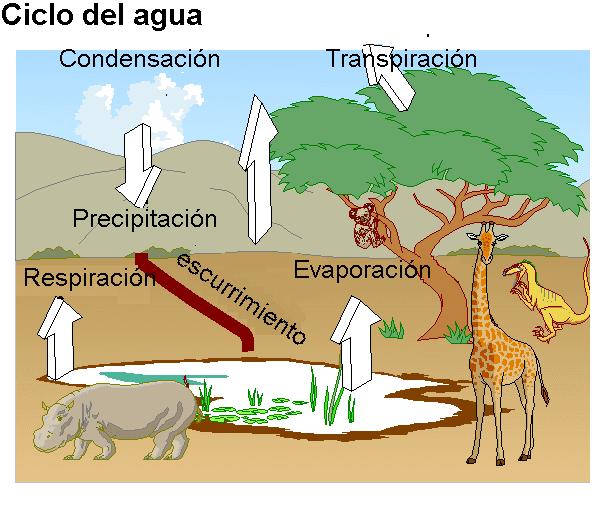 Elementos intervienen fotosintesis wikipedia 8