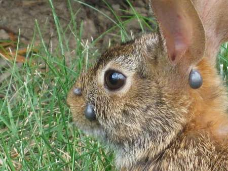 Can Dogs Catch Diseases From Rabbits