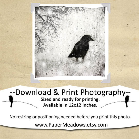 Crow in the snowy forest. Winter Crow Photography. You can purchase and download our photography creations and instantly print at home from our Paper Meadows Photography Shop on ETSY. To Visit our shop now click here.