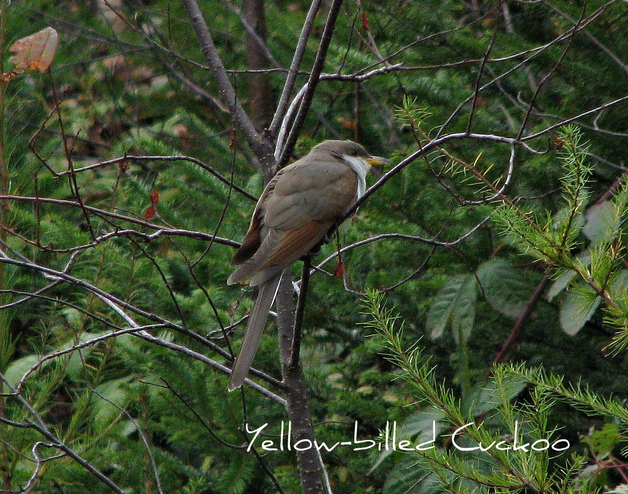 KaHolly Cuckoo For Cocoa Puffs