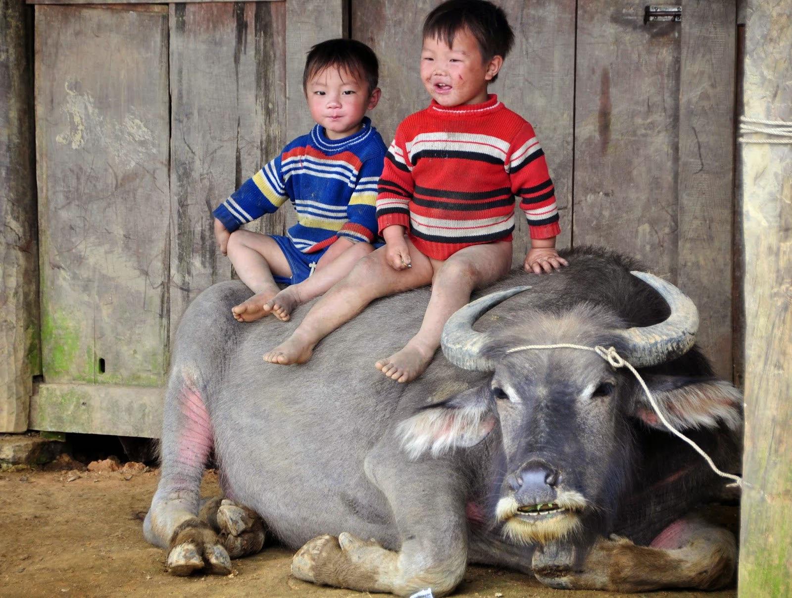 Viii rencontres du vietnam