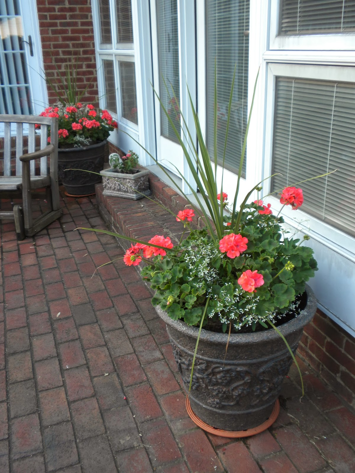Container Flowers - Annual Flowers for Containers, Pots ...