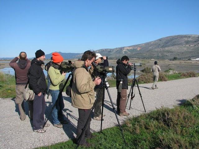 Μεσοχειμωνιάτικες Καταμετρήσεις Υδρόβιων Πουλιών 2012