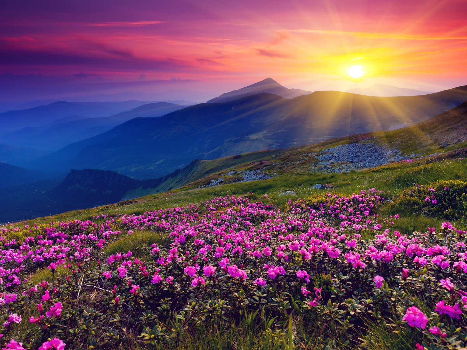 http://4.bp.blogspot.com/-52nmz9_ZimI/UFyAHX2F4ZI/AAAAAAAAEtA/sY_kTzAjsMs/s1600/Meadows-Purple-Wild-Flowers-Mountains-and-Sunset-HD-Wallpaper--NatureWallBase.Blogspot.Com.jpg