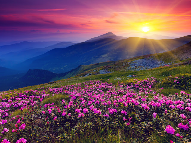 Green Meadows Wild Purple Flowers Mountains and Sunset Landscape Wallpaper