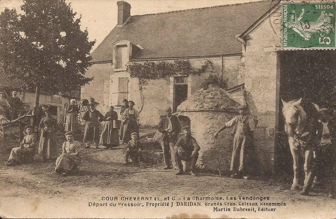 La Charmoise - Vendanges - Cour-Cheverny