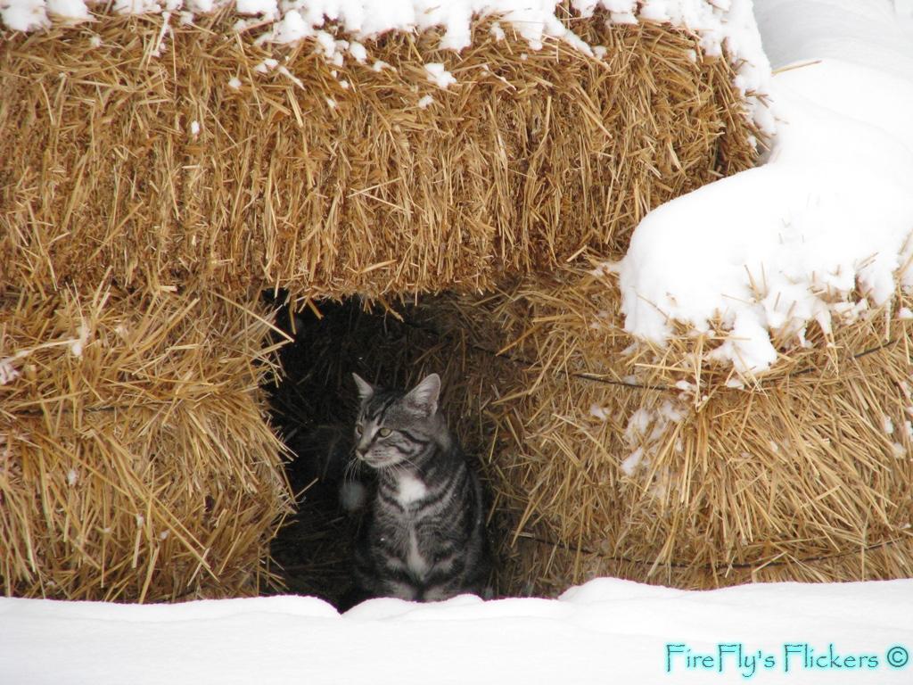 Hay Bale Dog House