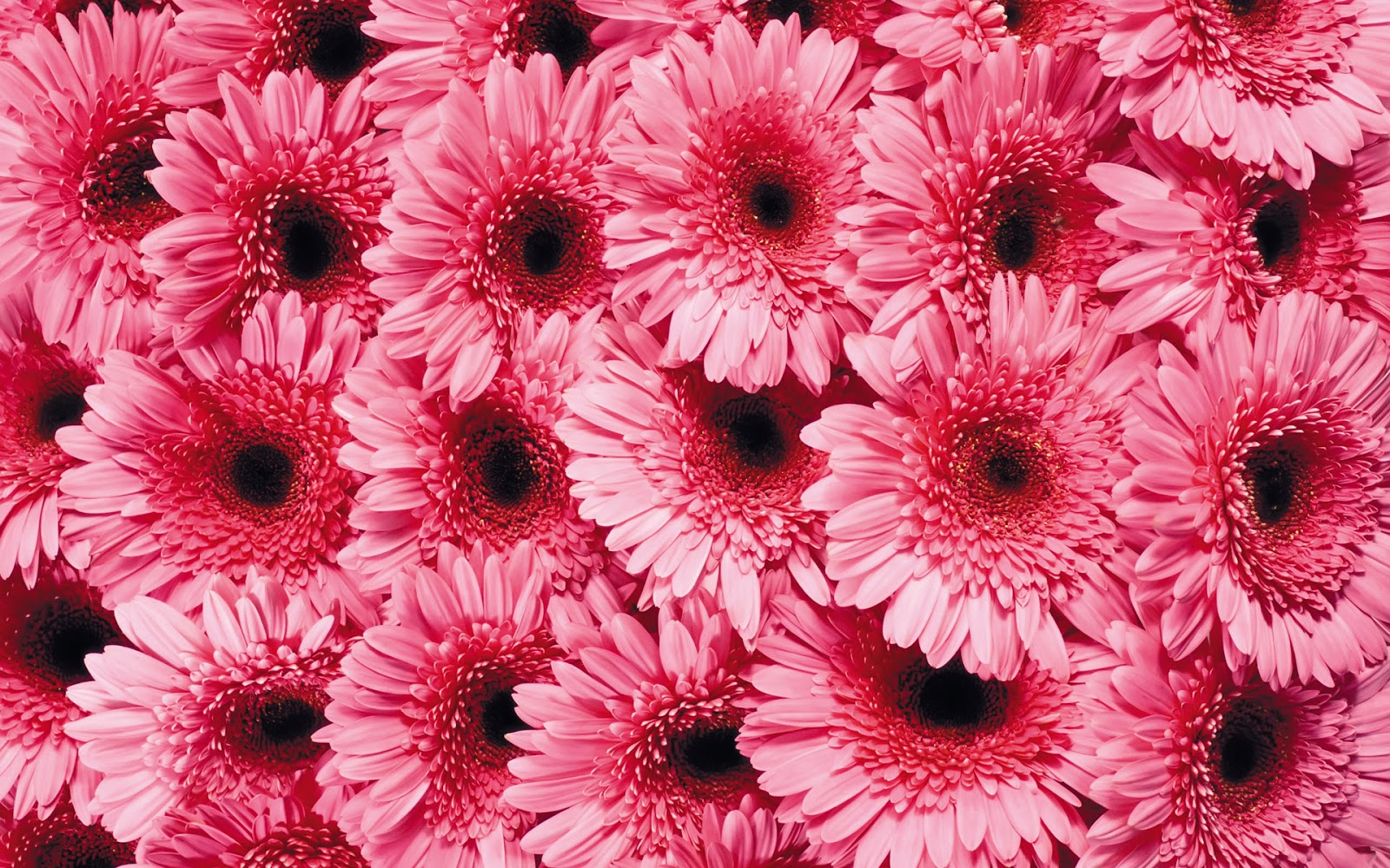 beautiful wallpaper beautiful cute flower wallpapers