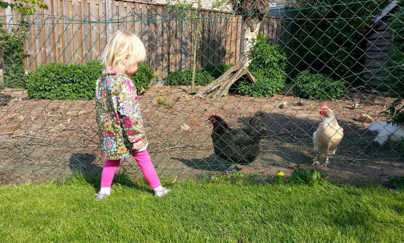 De kippen uitdagen