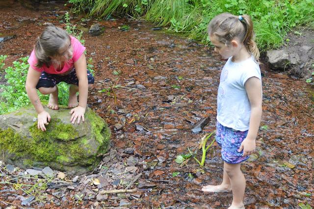 Castle Pill Woods, Pembrokeshire, Wales, Travel,