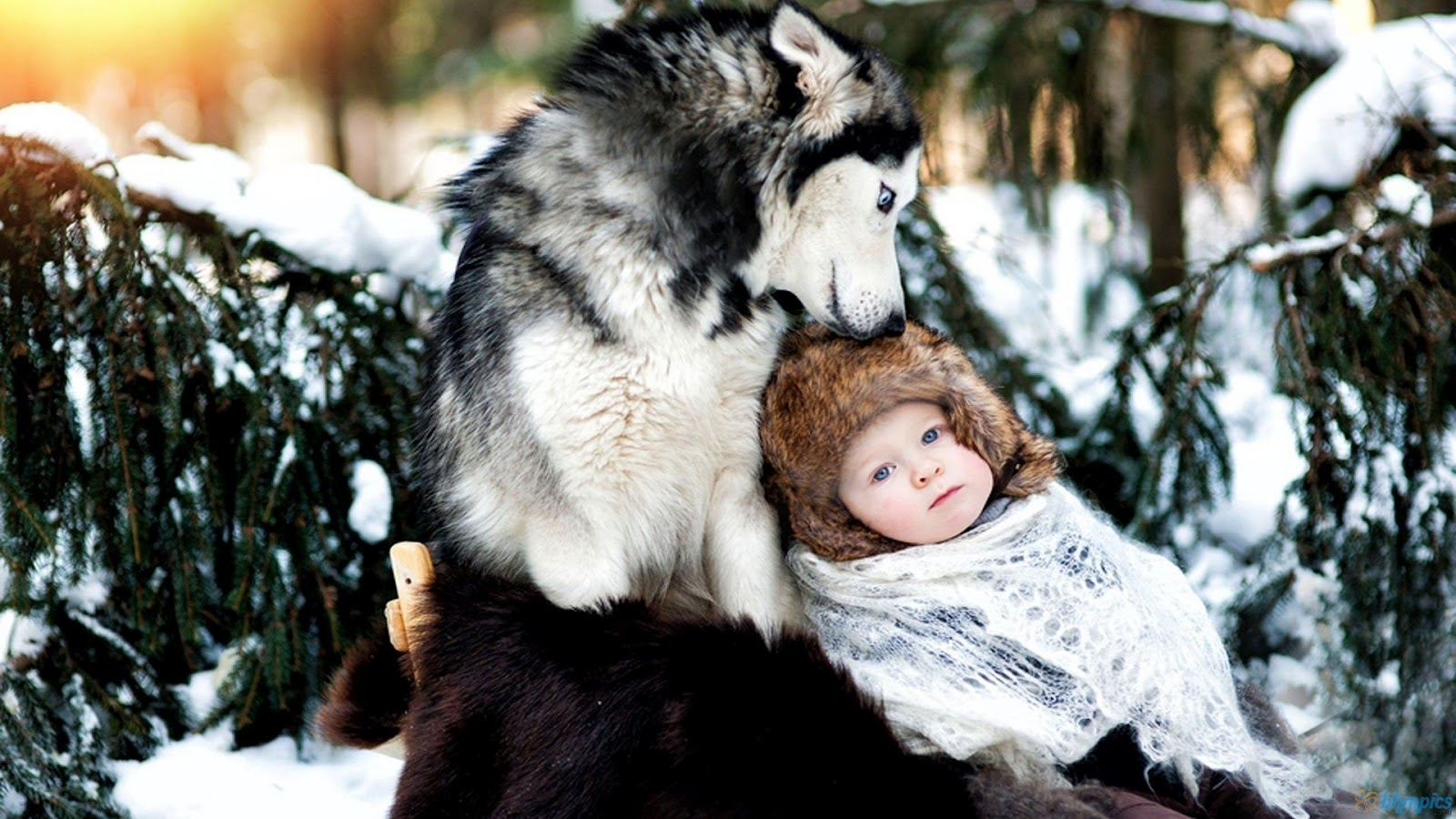 pictures snow baby and wolf wallpapers amp snow baby and wolf pictures