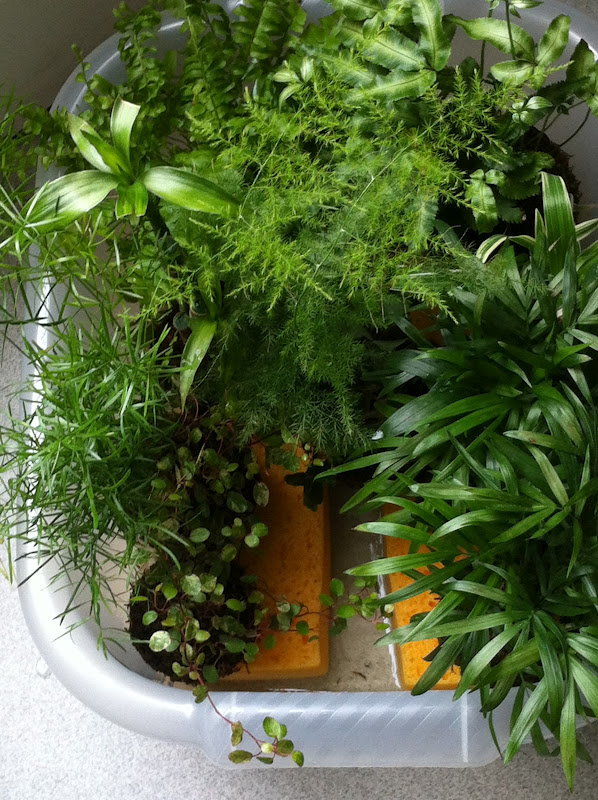 kokedama et petit bonsai 1semaines vacanses. Black Bedroom Furniture Sets. Home Design Ideas