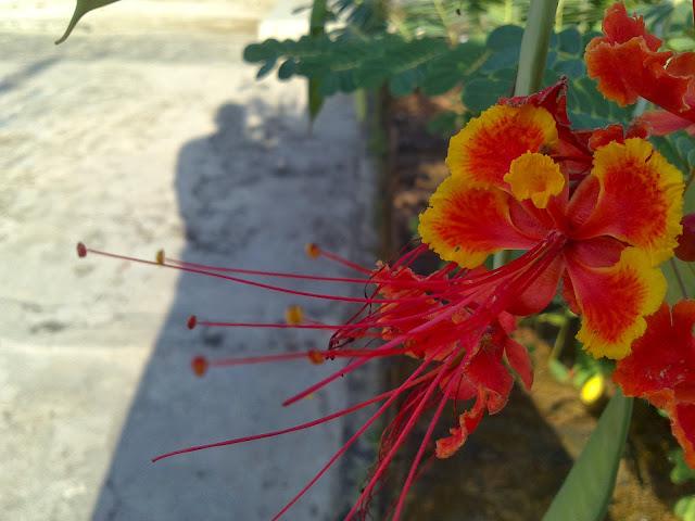 Bunga di depan rumahnya Dean