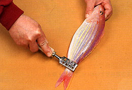 fish scale remover