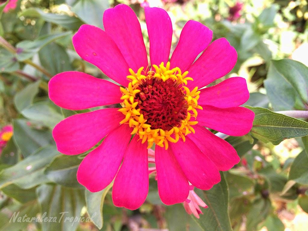 Imagenes ethel imagenes de flores mas hermosas y raras for 5 plantas ornamentales con sus nombres