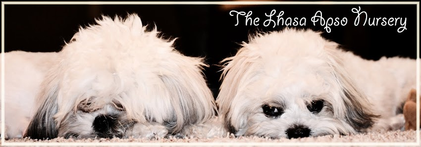 The Lhasa Apso Nursery