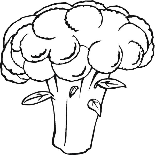 cauliflower coloring sheets coloring pages