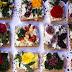 Las Flores en la Alimentación