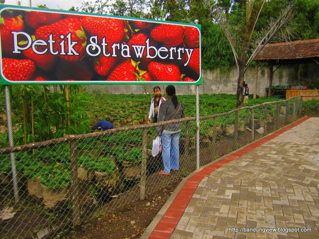 Floating Market Lembang Bandung View Tiket Masuk Petik Strawberry