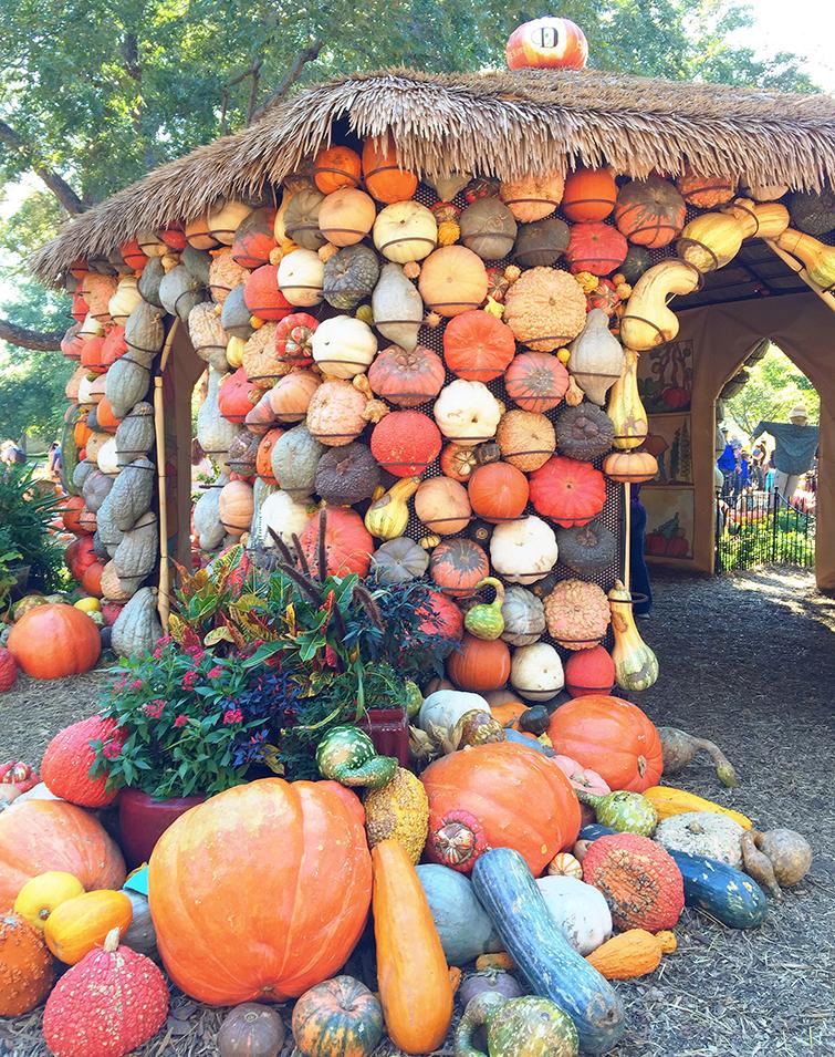 Dallas Arboretum Pumpkin Village Pumpkin House