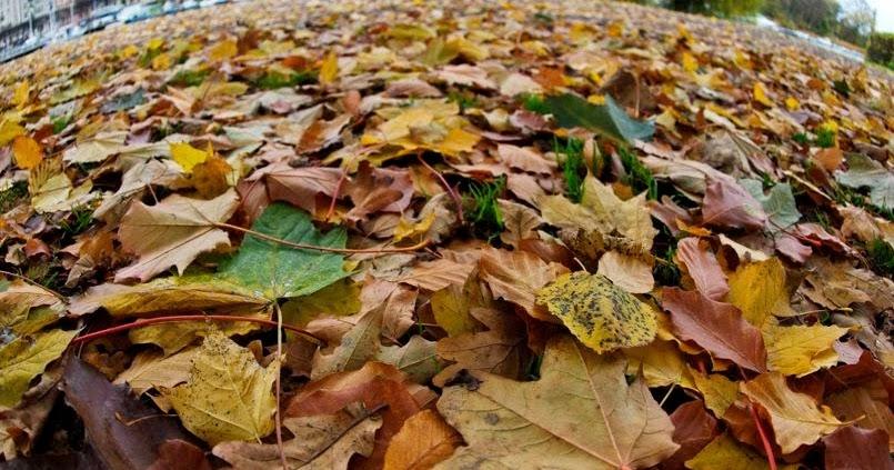 ma poubelle est un jardin ne pas jeter les feuilles mortes de vos arbres. Black Bedroom Furniture Sets. Home Design Ideas