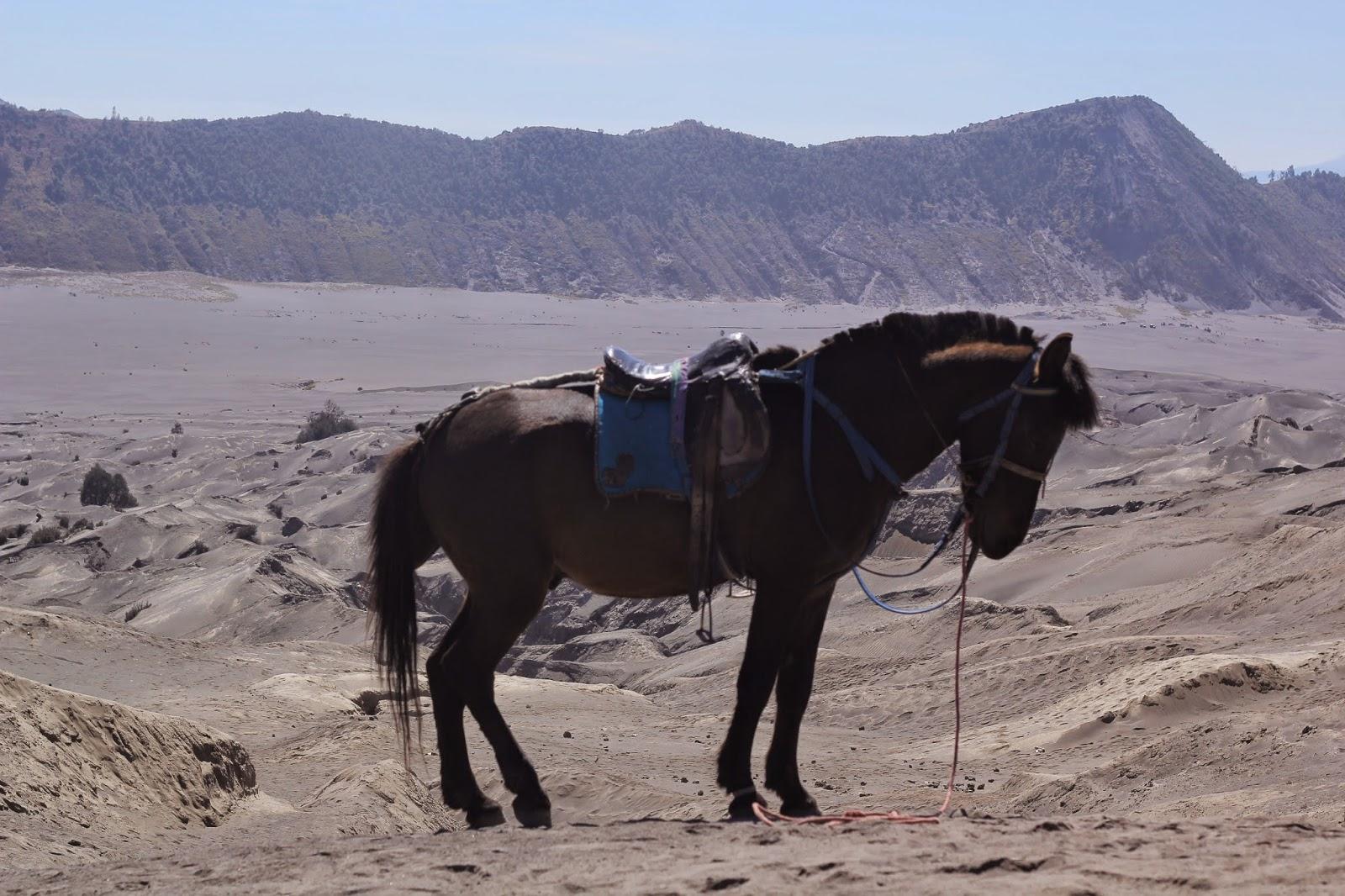kuda gunung bromo