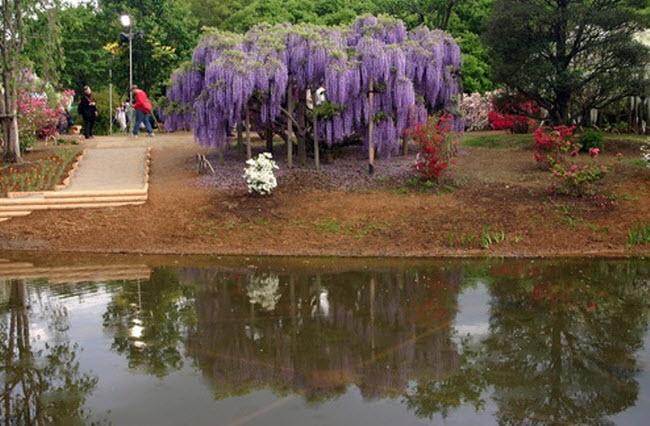 شلالات الزهور اليابانية Water_Fall_Flowers_Japan_7.jpg