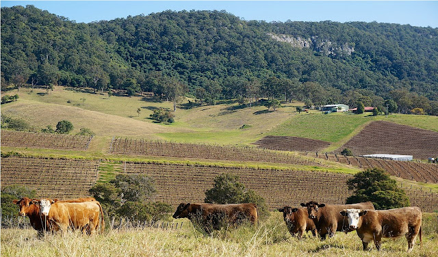 The Hunter Valley – NSW