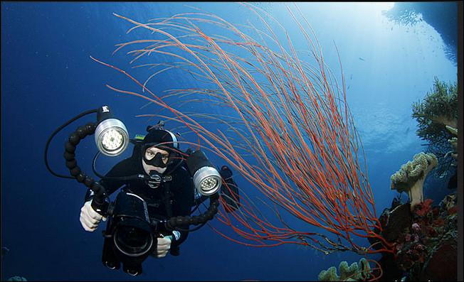 10 Tempat Menyelam di Laut Terbaik di Dunia