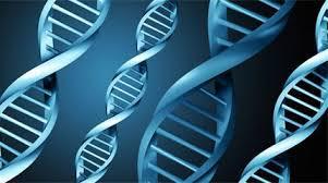 Γονίδια: δεν ελέγχουν τη ζωή μας