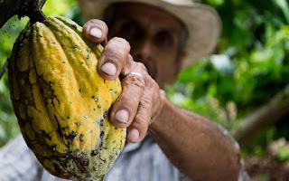 Cacao puro regula el sistema nervioso