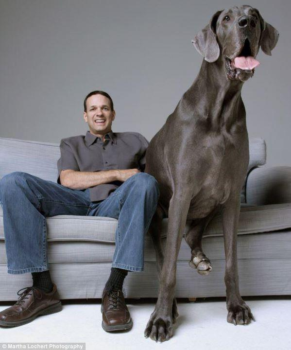 The Worlds BIGGEST Dog | Some Amazing Facts