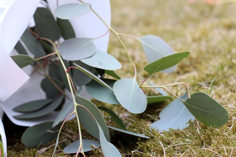 yksinkertainen eukalyptuksen oksa