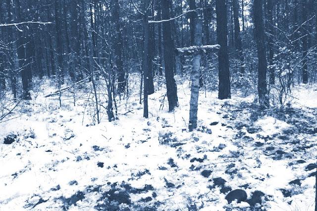 Bezimienna mogiła w lesie. Foto: internet.
