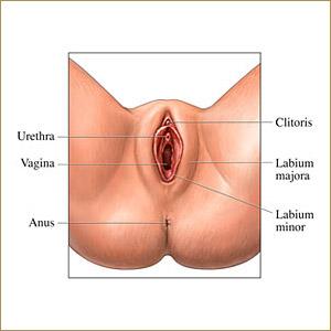 precancer of the vulva