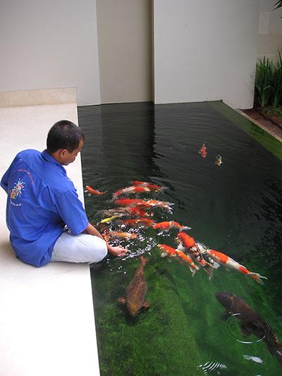 kolam ikan tips merawat kolam ikan