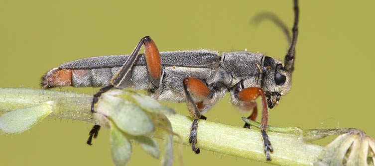 Boletín Sociedad Andaluza de Entomología Vol. 24