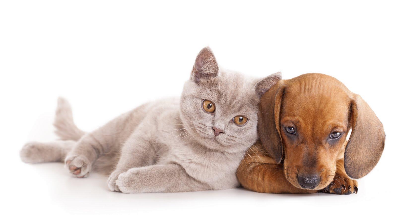 wallpapers de perros y gatos: