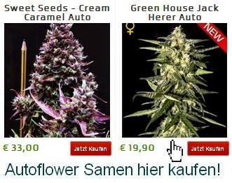 http://german.shayanashop.com/Cannabis_Samen/ls-Selbstbl%C3%BChende_Samen-1064-pm19.aspx?referid=page32