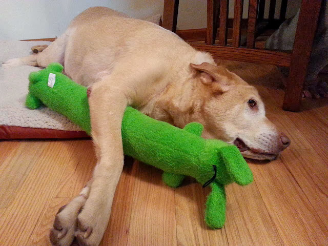 adorable dog pictures, dog holds his squeaky toy