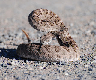 Guide to the snakes we have in the Valley