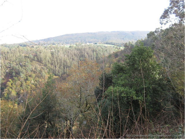 vista del bosque