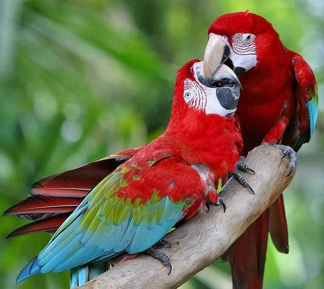 Beautiful Parrots Wallpapers Quotes Wallpapers