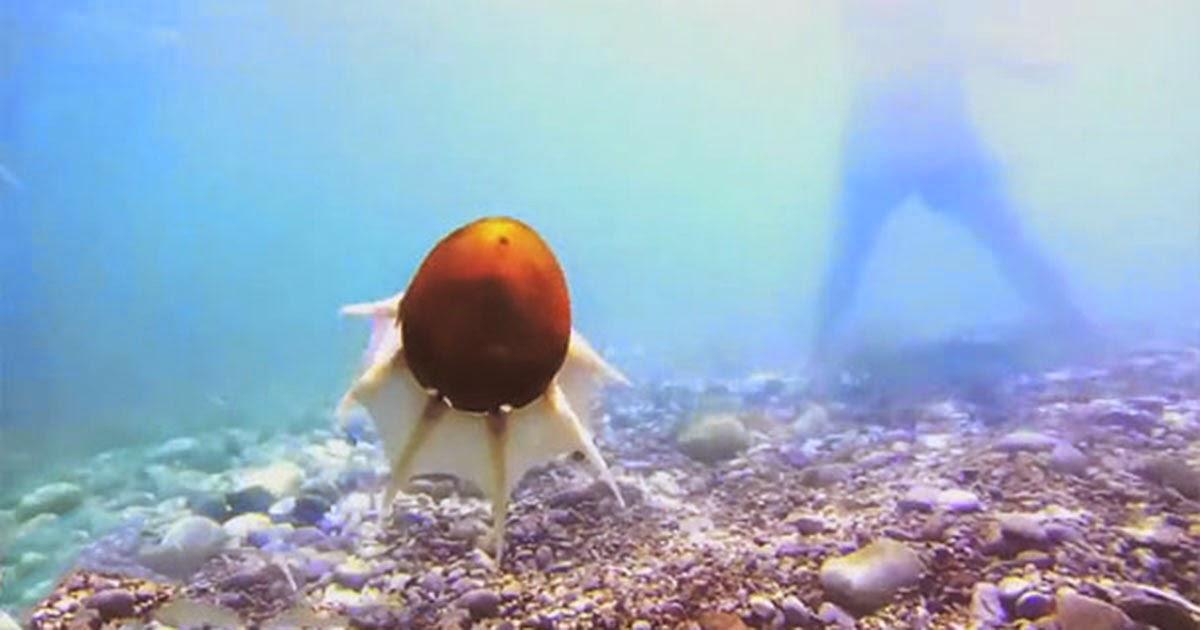روبوت مائي على شكل أخطبوط