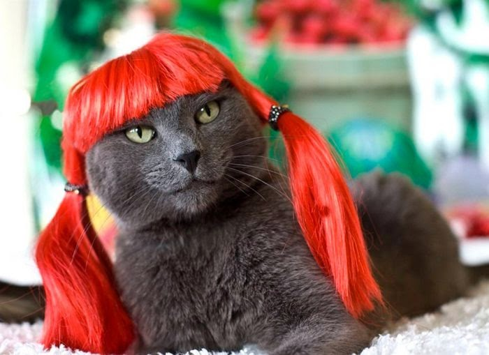 Funny cats - part 87 (40 pics + 10 gifs), cat wears red wig